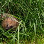BlogHedgehog